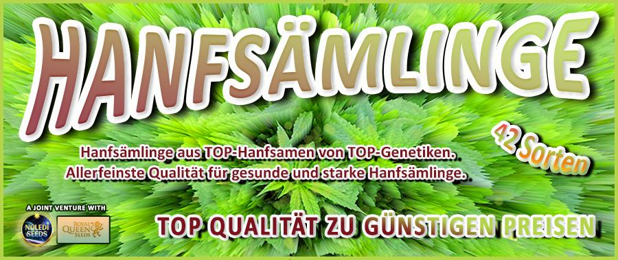 Wichtige Information: Unsere Hanfsämlinge sind ausschliesslich als Zier- oder Teepflanzen zu verwenden. Es bedarf einer künstlichen Beleuchtung von mindestens 18 Std./Tag um das Ausbilden der Fruchtstände zu verhindern. Mit Abschluss des Kaufvertrages verpflichtet sich der Käufer, die erworbenen Zierpflanzen zu keinem gesetzwidrigen Zweck zu verwenden. Sollte der Käufer beabsichtigen, Suchtmittel aus unseren Zierpflanzen zu gewinnen, wird eine Strafbarkeit nach dem österreichischen Suchtmittelgesetz begründet. Ist das für uns erkennbar, wird der Kaufvertrag abgelehnt oder ein bereits geschlossener Kaufvertrag wieder aufgelöst. Sollten sich trotzdem Fruchtstände ausbilden weil die Beleuchtungsdauer nicht ausgereicht hat, entsorgen Sie die Zier-/Teepflanzen einfach in Ihrem Biomüll.
